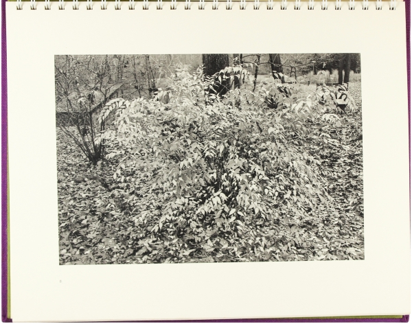 Flowers and Trees (Signed First Edition).